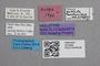 2819264 Stenus guttula mallorcinus HT labels2 IN
