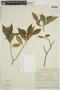 Duvernoia paranaensis Rizzini, Brazil, G. G. Hatschbach 14697, F
