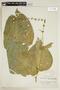 Streblacanthus cordatus image