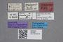 2819265 Stenus prahoensis ST labels IN