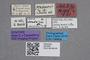 2819265 Stenus prahoensis ST labels2 IN