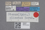 2819271 Stenus plicatus HT labels IN