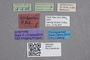 2819277 Stenus herbaceus ST labels IN