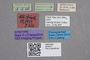 2819277 Stenus herbaceus ST labels2 IN