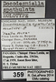 359 Docodesmiella spathulata HT IN labels