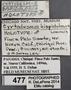 477 Cyrtodesmus hispidulosus HT IN labels