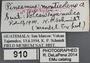 910 Pinesmus monticolens HT IN labels