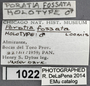 1022 Poratia fossata HT IN labels