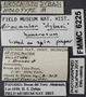 6225 Airocaulon humerosum HT IN labels