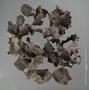 2993426 Formicidae Nest IN n60 hf18