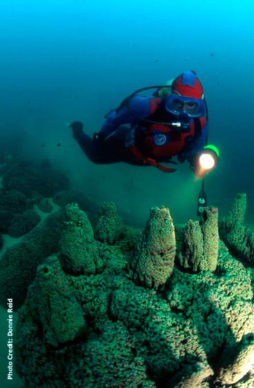 Stromatolites in fresh water lake (Pavilion Lake) 50 - 60 feet in British Columbia, Canada. 05/08/2012