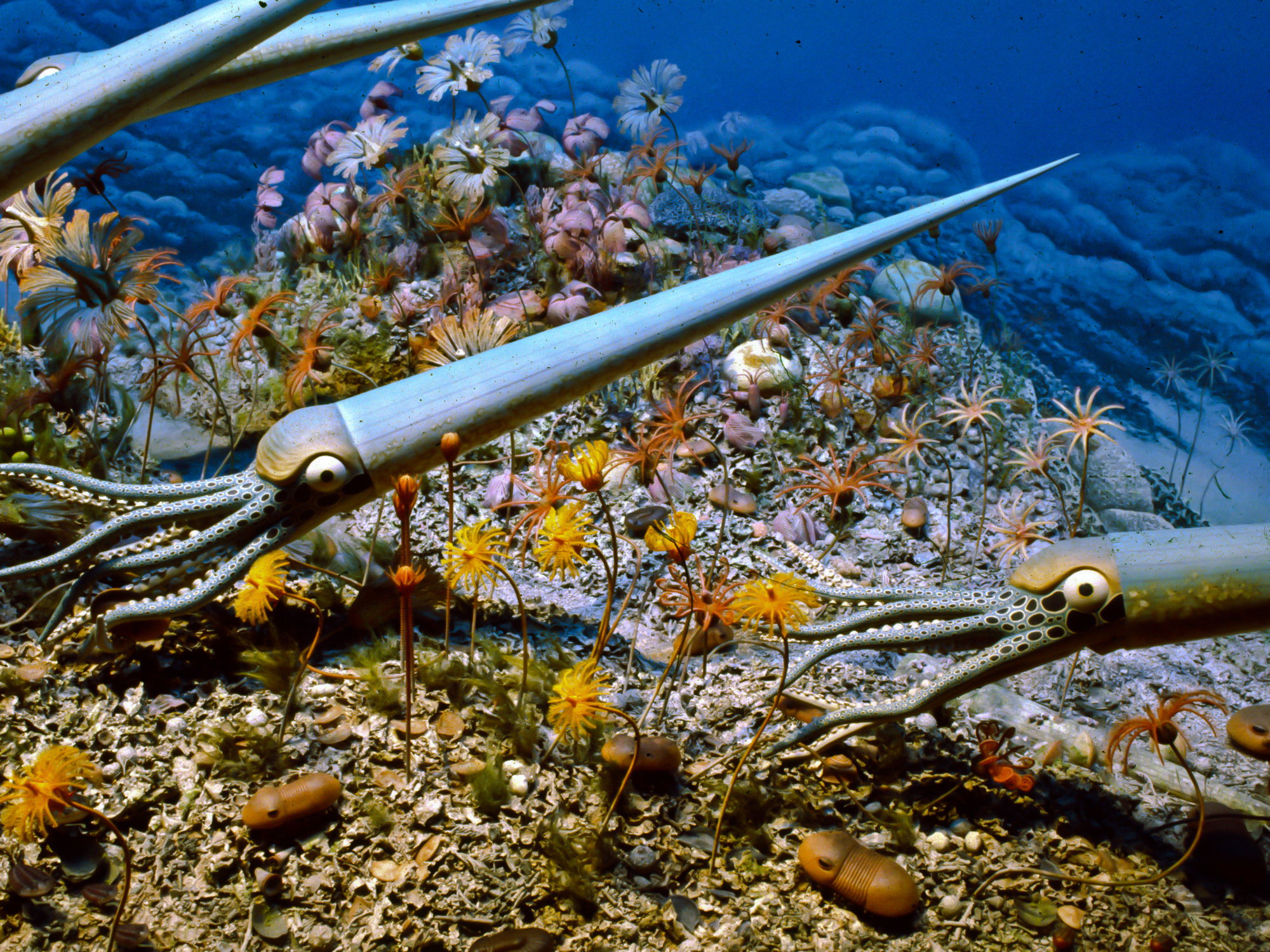 Closeup of cephalopods in the Silurian reef diorama at the Milwaukee Public Museum.