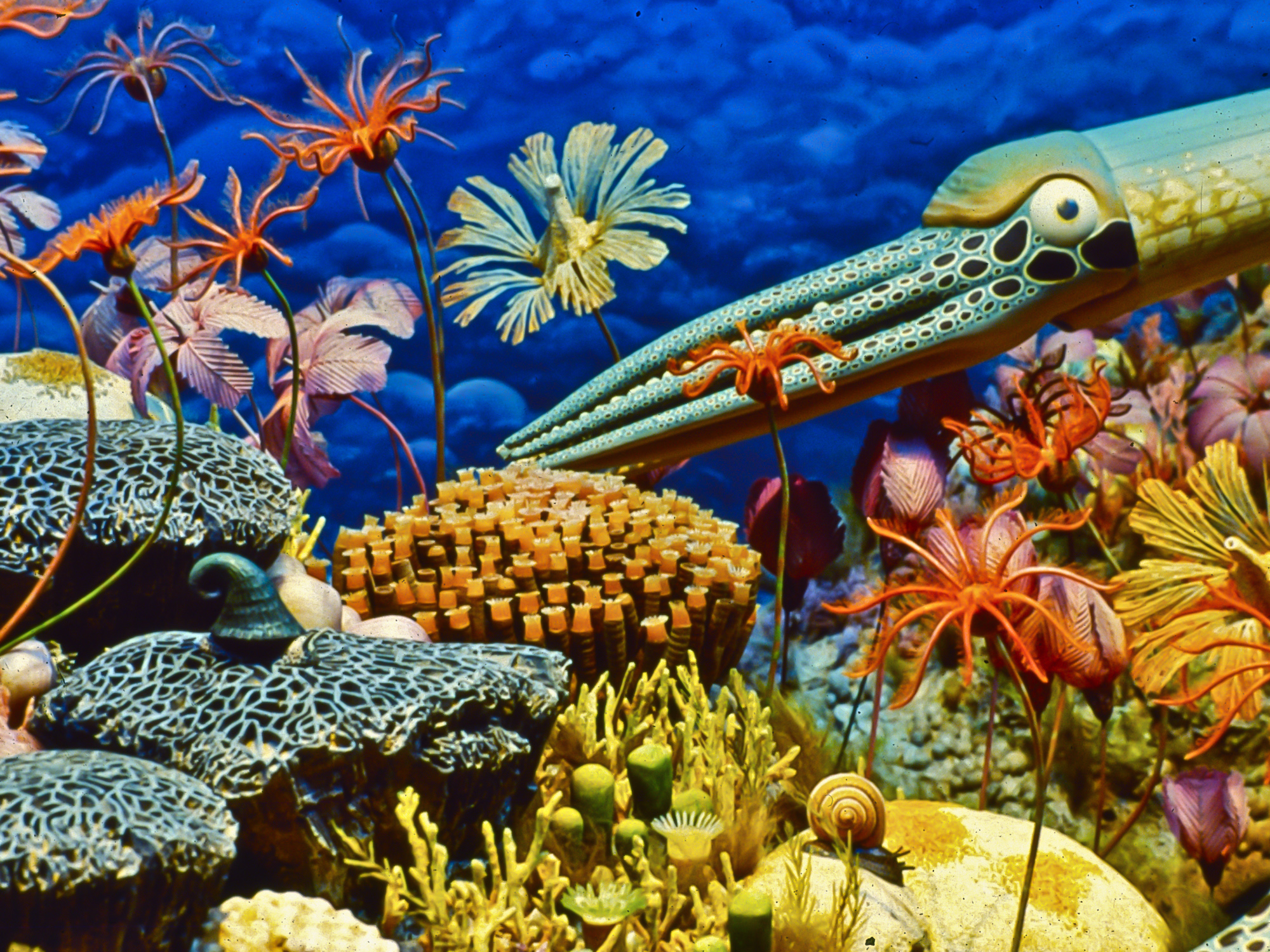 Closeup of cephalopod, crinoids, and other organisms in Milwaukee Public Museum's Silurian reef diorama
