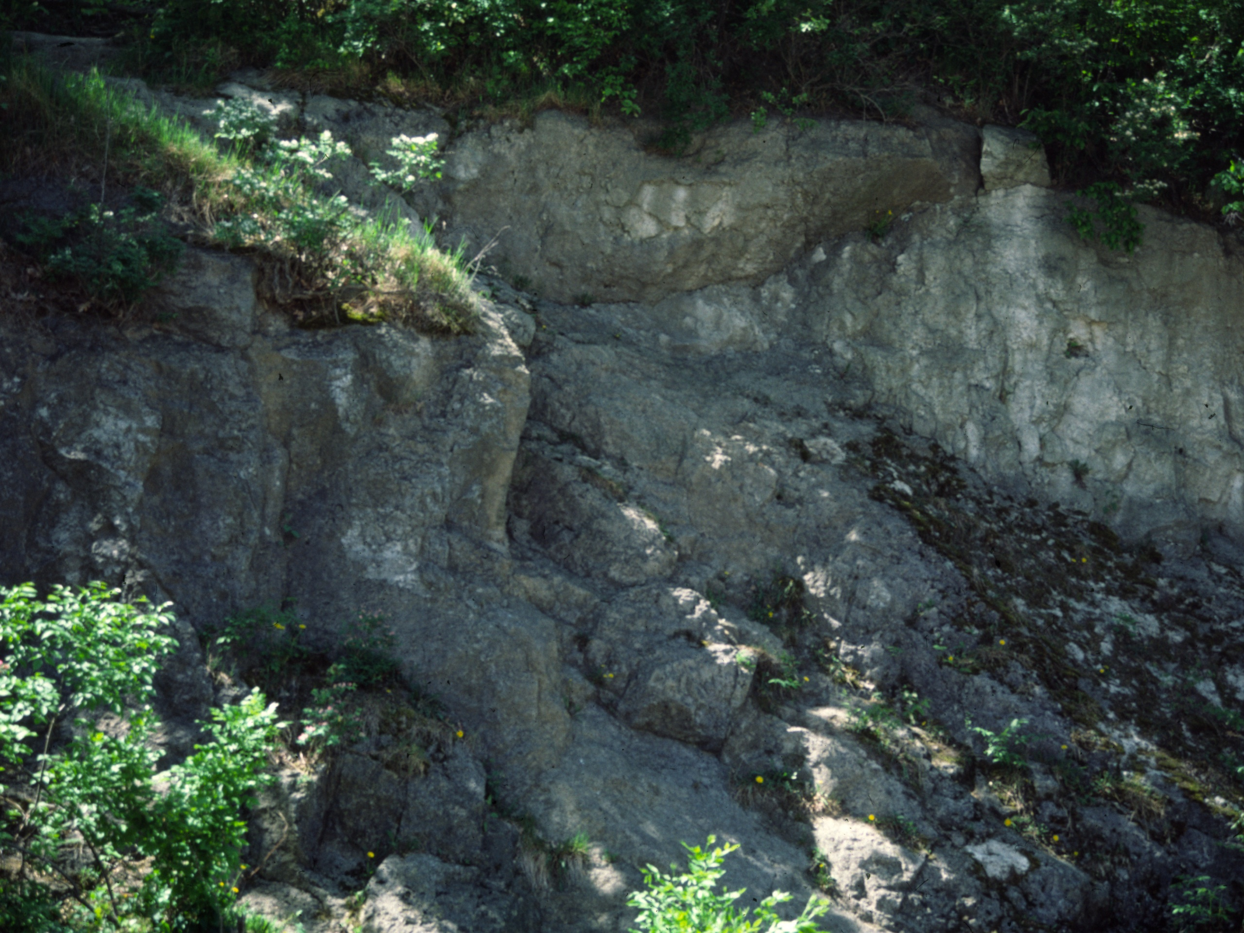 Silurian reef outcrop at Miller Park.