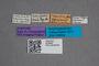 2819688 Quedius flavinasus var nigrifrons ST labels IN
