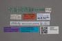 2819700 Atheta semisericea ST labels IN