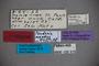123313 Fenderia mendax HT labels IN