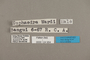124954 Euphaedra losinga wardi labels IN