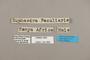 124956 Euphaedra medon inaequabilis labels IN