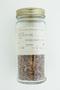 Acer tataricum L., Tartary Maple, U.S.S.R., F