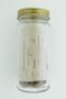 Picrodendron macrocarpum (A. Rich.) Britton, Jamaica Walnut, Bahamas, N. L. Britton 2895, F