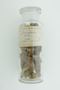 Berberis aquifolium Pursh, Stomachic Tonic, U.S.A., Hur. H. Smith 3266, F