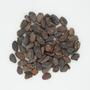 Theobroma cacao L., Surinam Bean, Dutch Guiana [Suriname], F