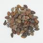 Theobroma cacao L., Sanchez Chocolate, DOMINICAN REPUBLIC, M. R. Kadushin, F