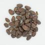 Theobroma cacao L., Cacao criollo, Venezuela, Ll. Williams, F