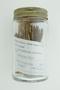 Lycopodium clavatum L., Club Moss, U.S.A., Hur. H. Smith, F