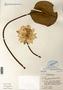 Image taken for vplants.org  project. Botanical specimen V0010198F