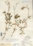 Image taken for vplants.org  project. Botanical specimen V0021530F