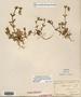 Image taken for vplants.org  project. Botanical specimen V0021544F