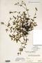 Image taken for vplants.org  project. Botanical specimen V0021546F