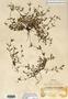 Image taken for vplants.org  project. Botanical specimen V0021554F