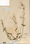 Image taken for vplants.org  project. Botanical specimen V0021561F