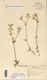 Image taken for vplants.org  project. Botanical specimen V0021563F