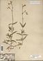 Image taken for vplants.org  project. Botanical specimen V0021602F