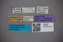 2819728 Edaphus carinipennis HT labels IN