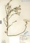 Image taken for vplants.org  project. Botanical specimen V0030261F