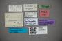 2819737 Edaphus ferdinandae HT labels2 IN