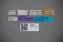 2819738 Edaphus foveicollis ST labels IN