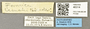 46314 Formica lemani L IN
