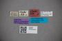 2819753 Stenus blandus ST labels IN