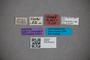 2819753 Stenus blandus ST labels2 IN