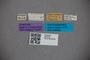 2819748 Edaphus luzonicus ST labels IN