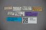 2819749 Edaphus magnipennis ST labels IN