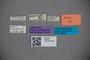 2819752 Edaphus nipponensis HT labels2 IN