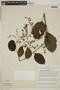 Tournefortia maculata Jacq., PERU, F