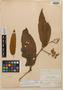 Virola aequatorialis Muriel & Balslev, Bolivia, M. Bang 1678, Isotype, F